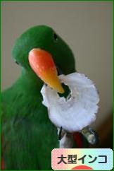 にほんブログ村 鳥ブログ 大型インコへ