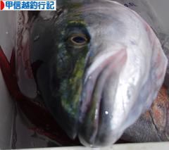 にほんブログ村 釣りブログ 甲信越釣行記へ
