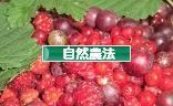 にほんブログ村 花・園芸ブログ 自然農・自然農法へ
