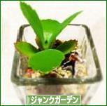 にほんブログ村 花・園芸ブログ ジャンクガーデンへ
