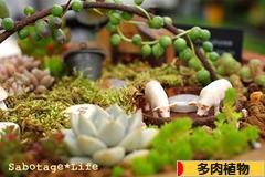 にほんブログ村 花ブログ 多肉植物へ