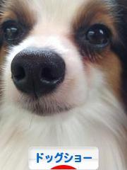 にほんブログ村 犬ブログ ドッグショーへ