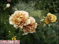 にほんブログ村 花・園芸ブログ ナチュラルガーデンへ