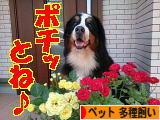 にほんブログ村 その他ペットブログ その他ペット 多種飼いへ