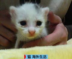 にほんブログ村 猫ブログ 猫 海外生活へ