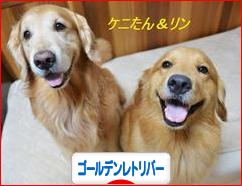 にほんブログ村 犬ブログ ゴールデンレトリバーへ
