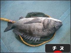 https://fishing.blogmura.com/chinuturi/img/originalimg/0000061322.jpg