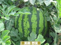にほんブログ村 花・園芸ブログ 果樹(・野菜)(家庭菜園)へ