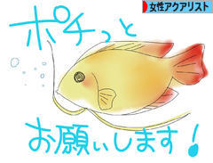 にほんブログ村 観賞魚ブログ 女性アクアリストへ