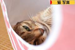 にほんブログ村 猫ブログ 猫 写真へ