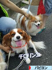 にほんブログ村 犬ブログ パピヨンへ