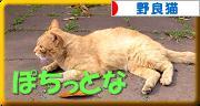 にほんブログ村 猫ブログ 野良猫へ