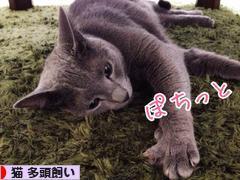 にほんブログ村 猫ブログ 猫 多頭飼いへ