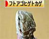 にほんブログ村 その他ペットブログ フトアゴヒゲトカゲへ