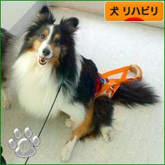 にほんブログ村 犬ブログ 犬 リハビリへ