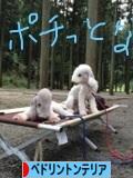 にほんブログ村 犬ブログ ベドリントンテリアへ
