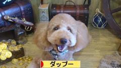 にほんブログ村 犬ブログ ダップーへ