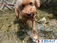 にほんブログ村 犬ブログ 犬 ボランティアへ