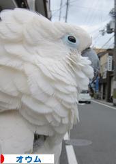 にほんブログ村 鳥ブログ オウムへ
