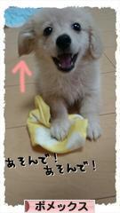 にほんブログ村 犬ブログ ポメックスへ