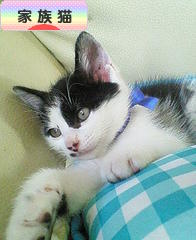にほんブログ村 猫ブログ 家族猫へ