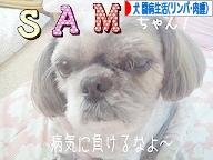 にほんブログ村 犬ブログ 犬 闘病生活(リンパ腫・肉腫)へ