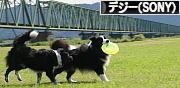 にほんブログ村 写真ブログ デジタル一眼(SONY)へ
