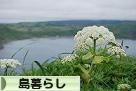 にほんブログ村 ライフスタイルブログ 島暮らしへ