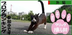 にほんブログ村 猫ブログ 外猫へ
