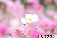 にほんブログ村 地域生活(街) 東京ブログへ