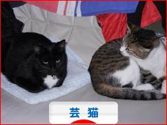 https://cat.blogmura.com/cat_gei/img/originalimg/0000678110.jpg