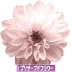 にほんブログ村 花ブログ プリザーブドフラワーへ