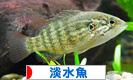 にほんブログ村 観賞魚ブログ 淡水魚へ
