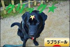 にほんブログ村 犬ブログ ラブラドールへ