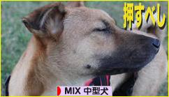 MIX中型犬ブログランキング参加用リンク一覧