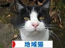 にほんブログ村 猫ブログ 地域猫へ