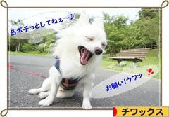 にほんブログ村 犬ブログ チワックスへ