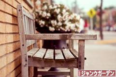 にほんブログ村 花ブログ ジャンクガーデンへ