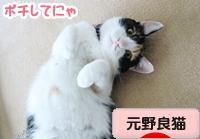 にほんブログ村 猫ブログ 元野良猫へ