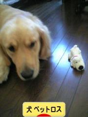 にほんブログ村 犬ブログ 犬 思い出・ペットロスへ