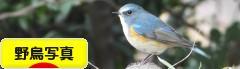 にほんブログ村 写真ブログ 野鳥写真へ