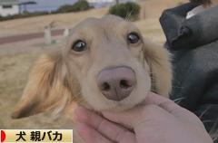 にほんブログ村 犬ブログ 犬 親バカへ