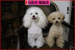 にほんブログ村 犬ブログ 兄弟犬・姉妹犬へ
