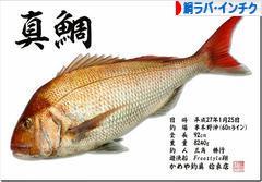 にほんブログ村 釣りブログ 鯛ラバ・インチクへ