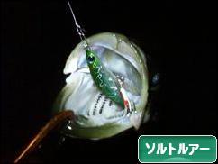 にほんブログ村 釣りブログ ソルトルアーフィッシングへ