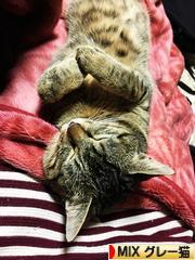 にほんブログ村 猫ブログ MIXグレー猫へ
