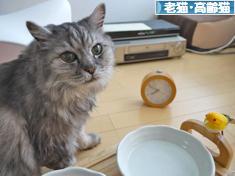にほんブログ村 猫ブログ 老猫<br /></div><div class=