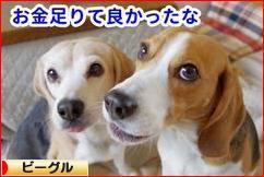 にほんブログ村 犬ブログ ビーグルへ