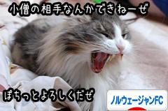 にほんブログ村 猫ブログ ノルウェージャンフォレストキャットへ