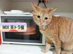 にほんブログ村 猫ブログ MIX茶トラ猫へ